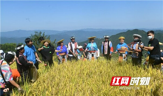 """9月22日上午,一场主题为""""庆丰收·感党恩""""的怀化市庆祝中国农民丰收节系列活动在溆浦县葛竹坪镇山背村拉开序幕。"""