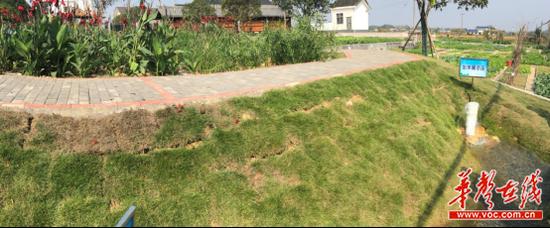 金桥村污水处理系统出水展示区