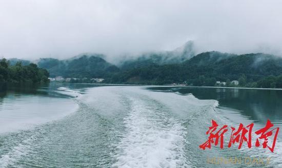 (9月16日,洋泉湾村云蒸雾绕,犹如一幅水墨画。胡盼盼 摄)