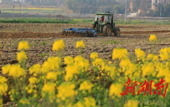 (2月23日,衡阳县关市镇汇水村,村民驾驶耕种机在田间劳动。 曹正平 刘欣荣 摄)