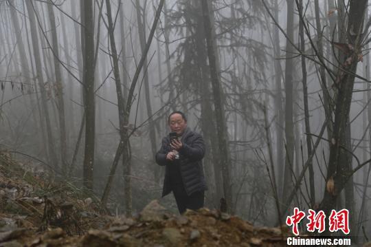 车大河村村主任刘元银拍摄药材图片。 张卫 摄