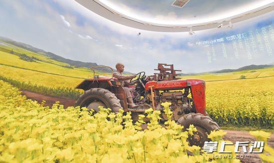 这是展厅中《耕耘大地》主题场景。在一片金灿灿的油菜花中,年轻的雷锋正精神抖擞地驾驶着拖拉机。这种动态半景画沉浸式体验空间,让人身临其境。 长沙晚报记者 李锋 摄