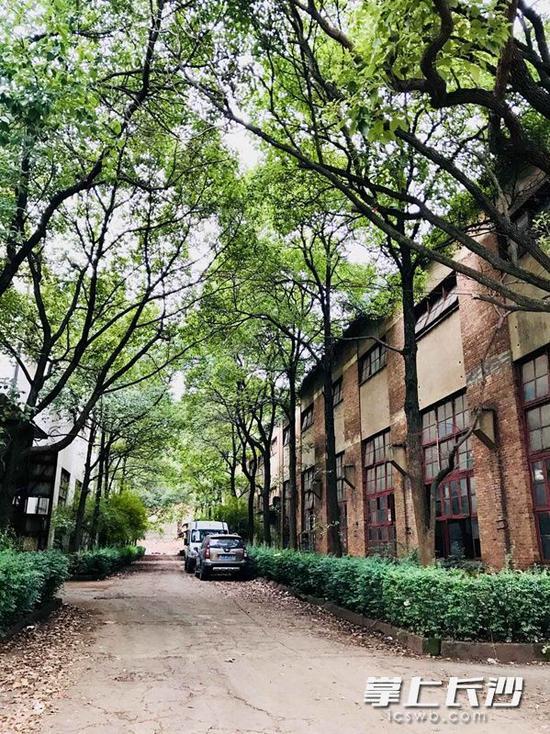 香樟树下静静矗立的长沙鼓风机厂老旧红砖厂房,烙下着上世纪50年代火热工业风的印记。涂柏林 李卓 摄影报道
