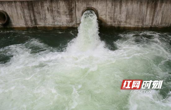 为了缓解旱情,栗江一级泵站立即启动10台工程装机。