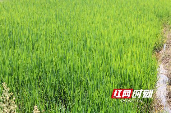 衡南沿线3个乡镇、4.55万亩农作物的灌溉得到了保障。