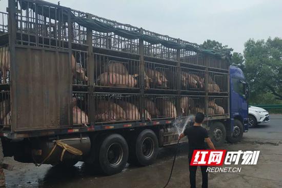 珠晖区严格查堵从疫区省或途经疫区省的生猪输入。