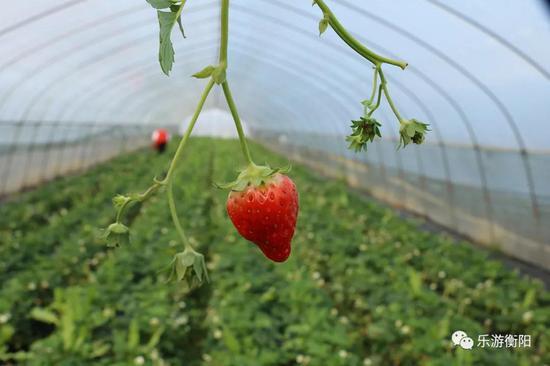 来草莓园一起品尝春天的那抹甜