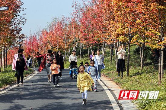 市民纷纷前来看枫赏秋。