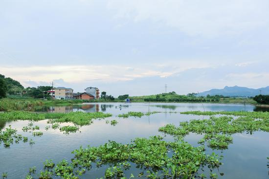 罗氏沼虾养殖基地。