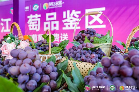 """浦江葡萄甜蜜入湘 绿叶水果700家门店抢""""鲜""""上市"""