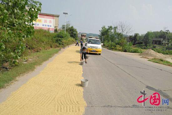 时值稻谷收割高峰,不少农户将稻谷晾晒在公路路面上,给交通造成极大安全隐患