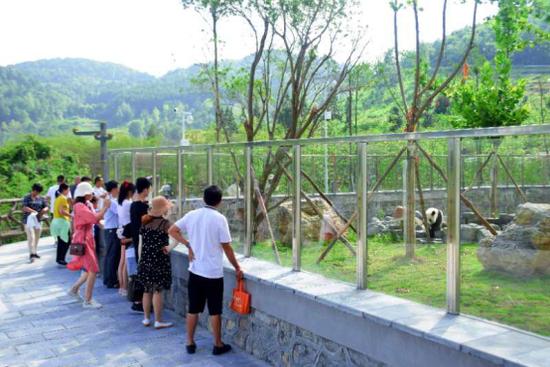 游客们正兴致勃勃给熊猫拍照。