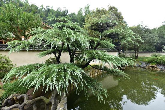 田茂现代农庄园林景观(局部)