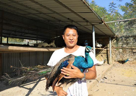 李志平与他的蓝孔雀 李明华摄