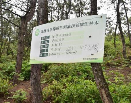 贵州省单株碳汇精准扶贫碳汇林木