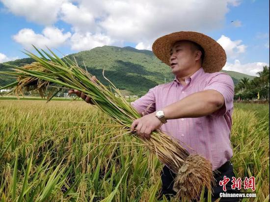 """袁隆平""""超优千号""""水稻测产创海南单产历史最高纪录。"""