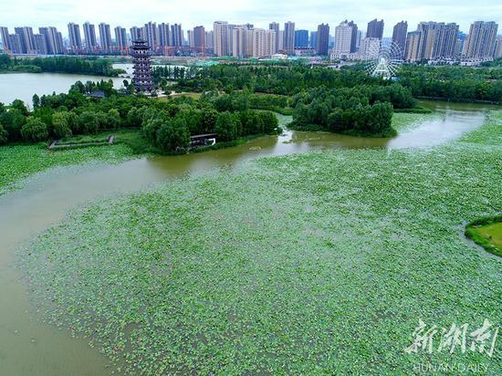 国际生物多样性日 长沙洋湖湿地生态美