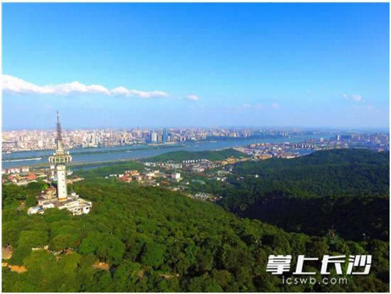 岳阳市大量柑橘胡柚烂枝头 市民呼吁自由摘