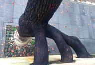 """中南大学铁道学院有一棵""""成精""""的樟树"""