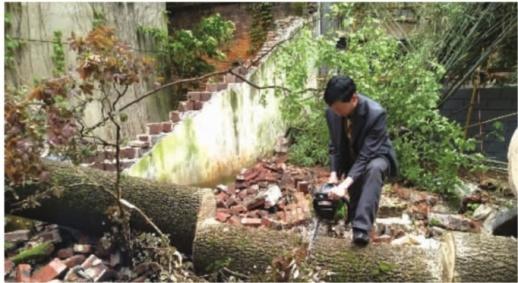 4月17日上午,抢修人员正在截断被风吹倒的泡桐树,以方便清理。 记者 杨昱 摄