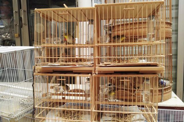 还有这种操作?长沙一贩卖野生鸟店铺专门卖给放生人