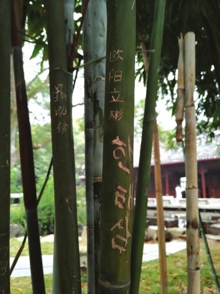 岳麓书院的竹林里很多竹子被刻了字,其中还有韩文。