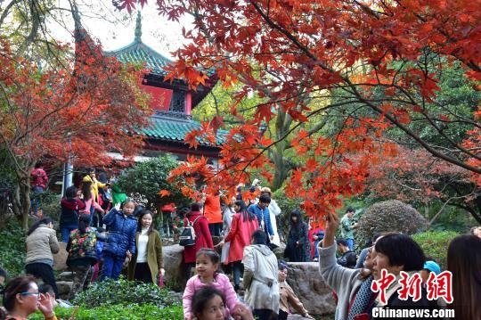 岳麓山枫叶迎最佳观赏期 游客扎堆