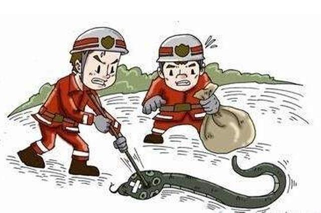 湿热天蛇虫出没 长沙多名老人被蛇咬伤