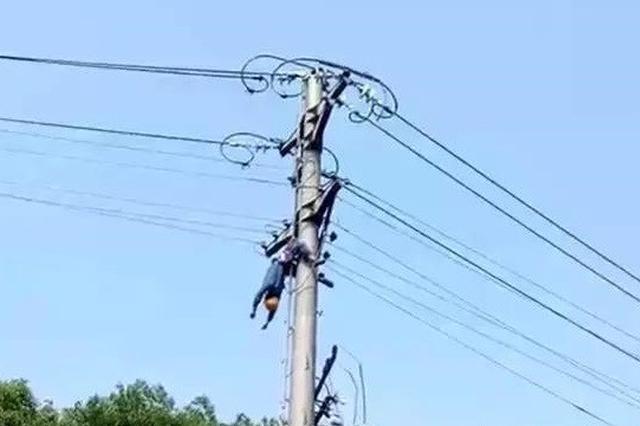 娄底一电工疑似在高压电杆上触电身亡
