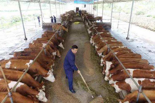湖南全省规模养殖场粪污处理设施配套率超80%