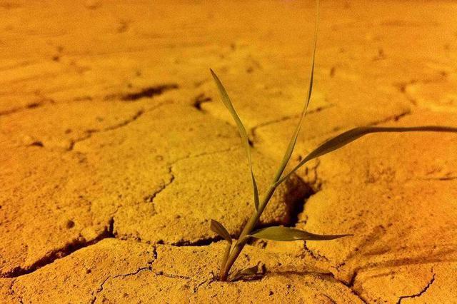 湖南38个县市区180余万亩农田受旱 湘北干旱持续发展