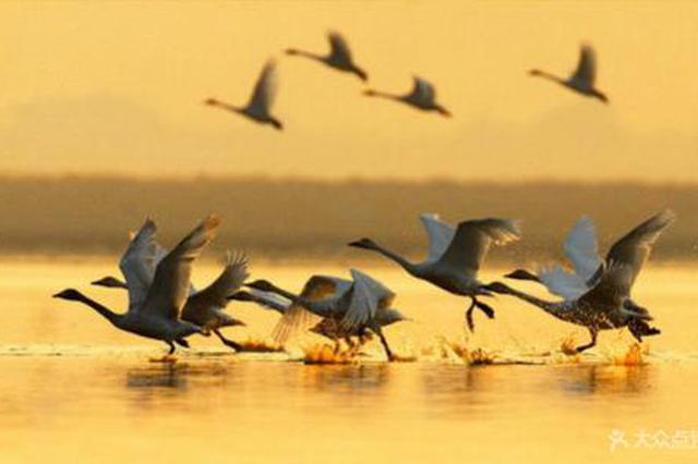 道县多措并举推进候鸟保护工作 立案9起处罚10人