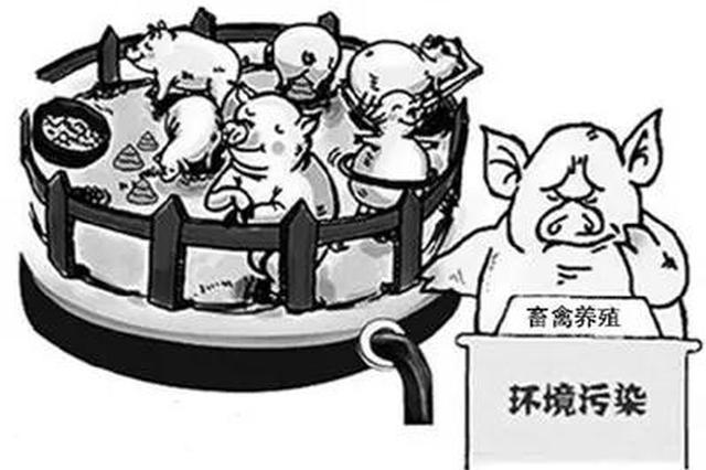 """""""禁养区""""内非法养殖生猪 常德一男子被拘7日"""