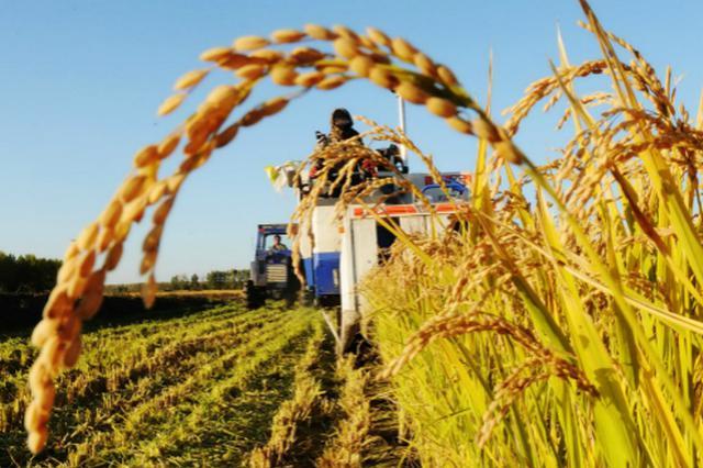 湖南大力發展糧食產業經濟 到2022年糧食產業新增千億產值