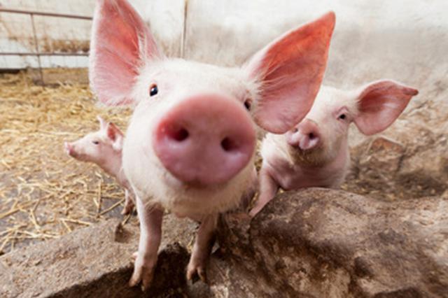 農業農村部專家組來桃源指導非洲豬瘟防控工作