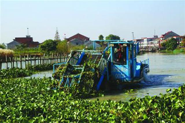 湘江株洲段日前现大量水葫芦 日均打捞近百吨