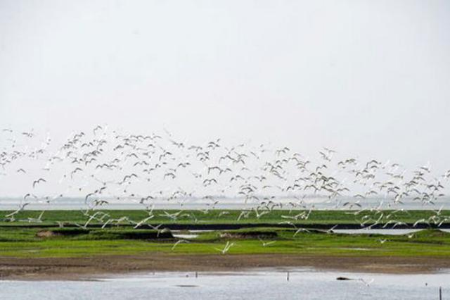 东洞庭湖砂石码头还湿复绿迎来万鸟翔集 比往年多2成