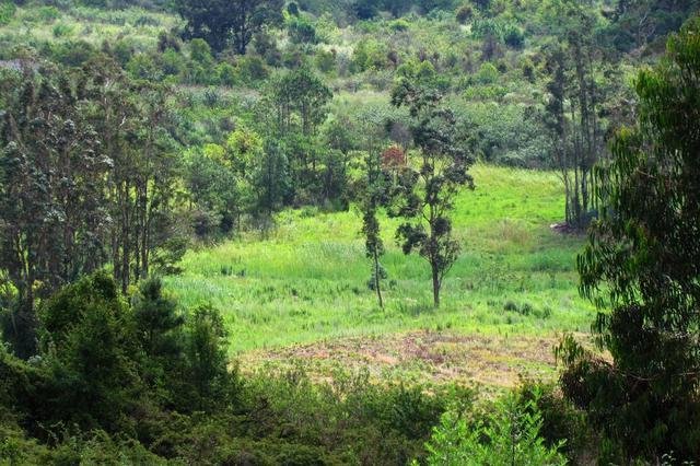 违规炼山毁林1208亩 被告人犯失火罪获刑