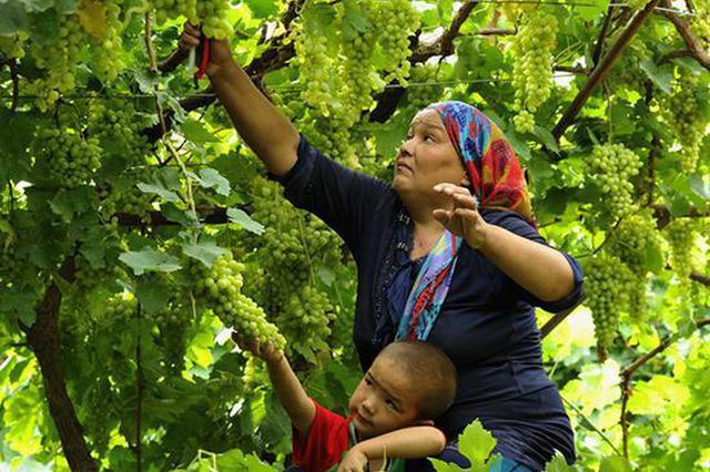 吐鲁番特色年货节来长沙!除了葡萄和哈密瓜 还能吃到看到这些
