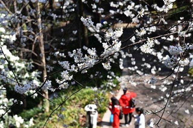 强降雨来袭 明后两天湘南局地暴雨湘北有雨夹雪