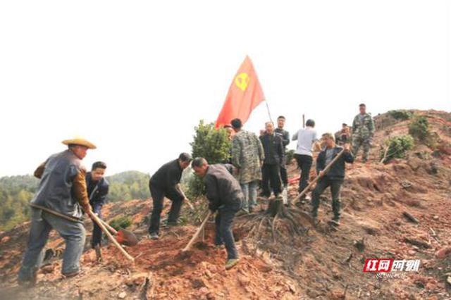 湖南女子学院驻村工作队组织党员义务植树