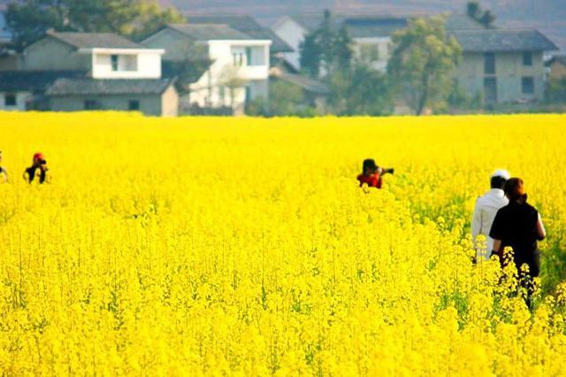 清明小长假 岳阳红色旅游和踏青赏花将迎来小高峰