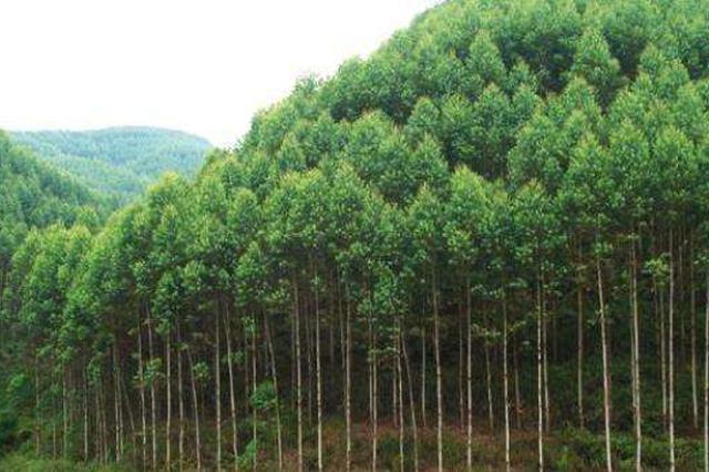 常德去年完成营造林超百万亩