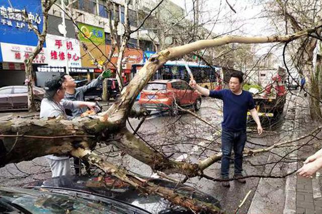 惊险!大树砸中小车 邵阳园林部门紧急处理