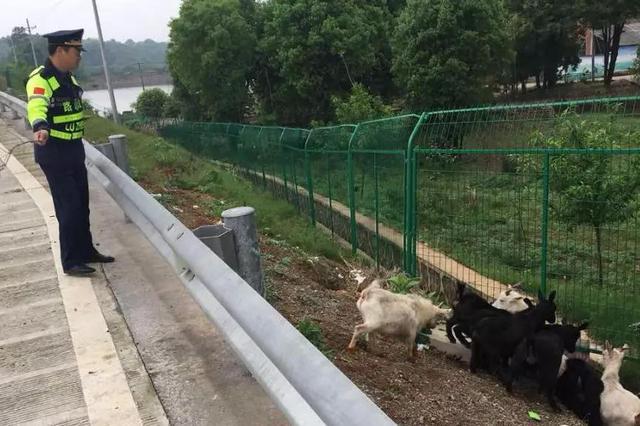 高速上巡逻捡了一群肥羊 当然是要……