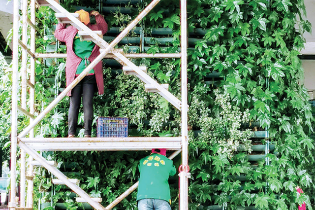盛夏将至 常德园林工人更换养护绿化盆景
