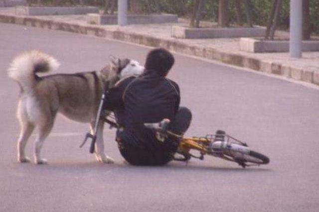 澧县男子骑车被狗吓倒受伤 狗主人赔偿14000元
