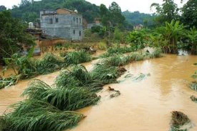 湖南省农科院专家赶赴灾区 开展灾后减损技术服务