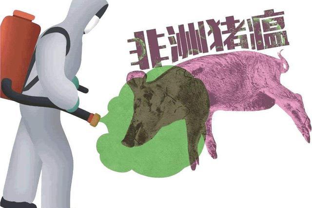 """常德非洲猪瘟防控启动""""夏季攻势"""""""