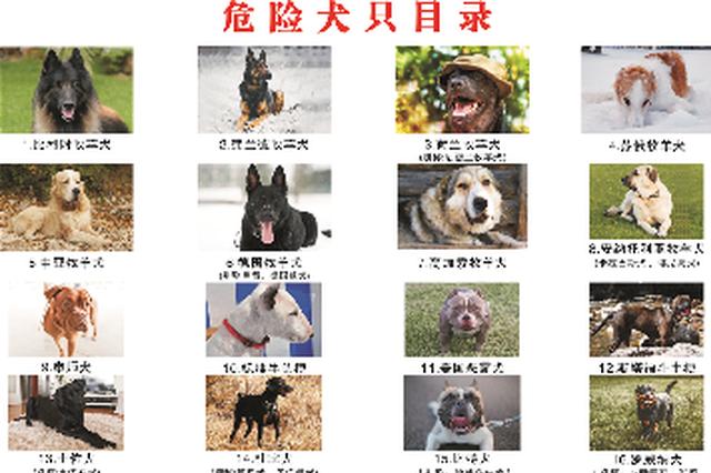 42种犬类被禁养 常德6部门联手规范市城区养犬行为